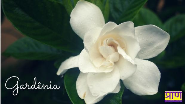 Arruda (2)