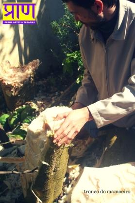 tronco de mamoeiro (3)